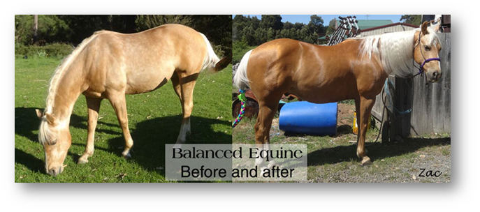 Before-after-Balanced Equine Nutrition