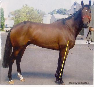 Hoof Boots Australia - Sore hooves - sore horse!